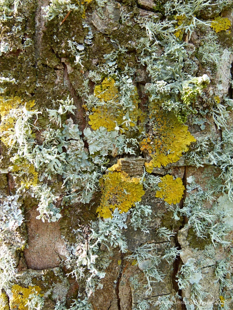 Lichens growing on a tree