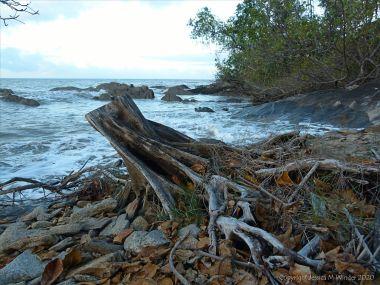 Tree stump on the shore at trinity Beach