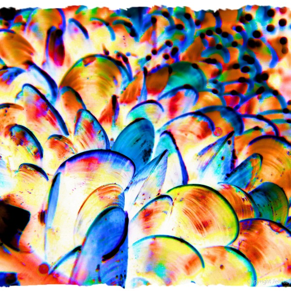 Colourful re-imagination of growing mussel shells