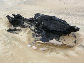 Burnt driftwood on a sandy beach