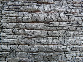 Burnt Driftwood 2