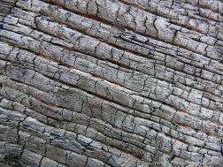 Close-up detail of burnt driftwood on a sandy beach