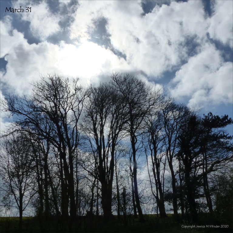 Line of trees 31st March 2020