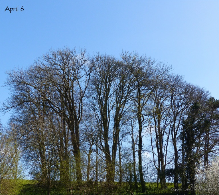 Line of trees April 6th 2020