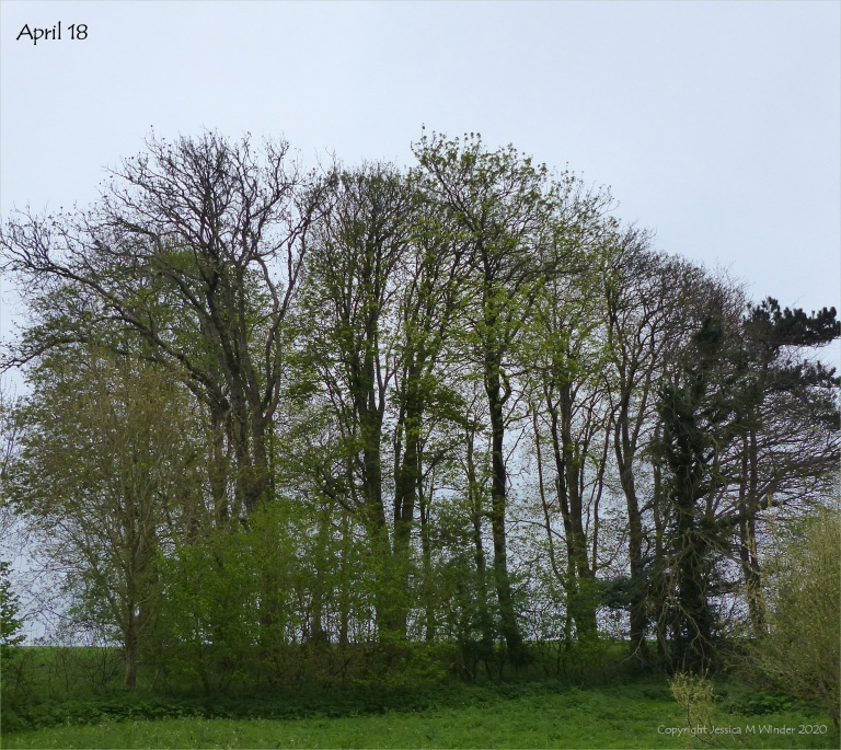 Line of trees April 18th 2020