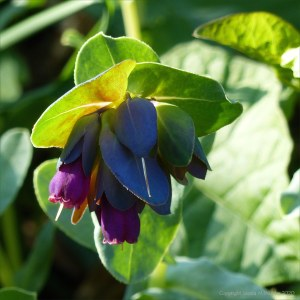 Strange flower at Charlton Down