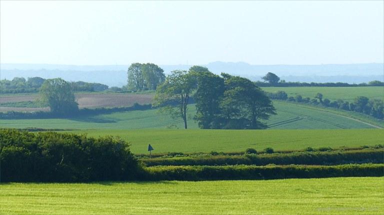 Fields around Charlton Down in Spring