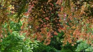 Sunlit leaves on trees in springtime