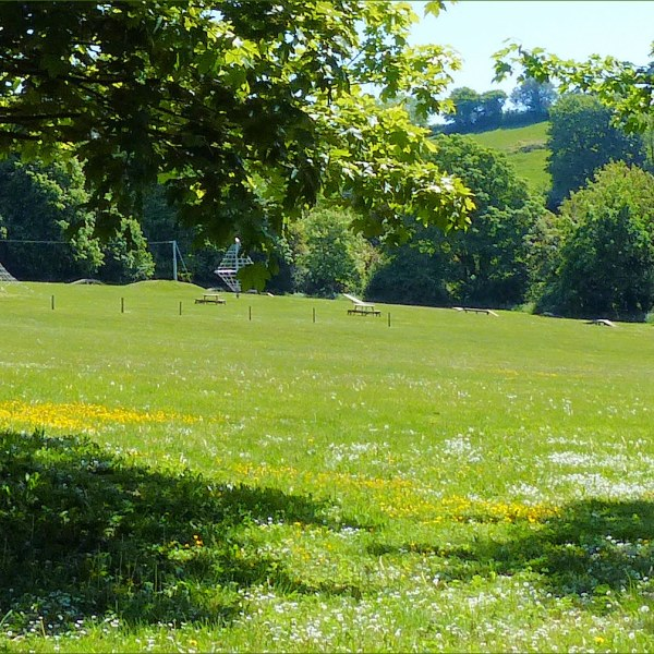 Playing field with buttercups and daisies beneath the trees