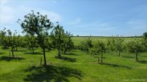 View of the Community Orchard in spring