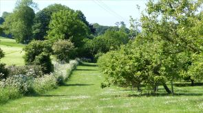 View of the Community Orchard in May