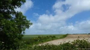 Arable fields near Charlton Down