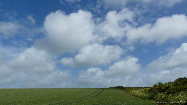 Wgeat field near Charlton Down