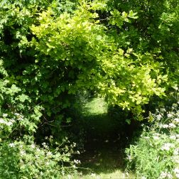 Leafy arch over the meadow path