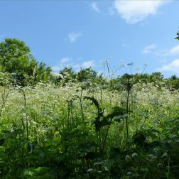 Meadow plants in May