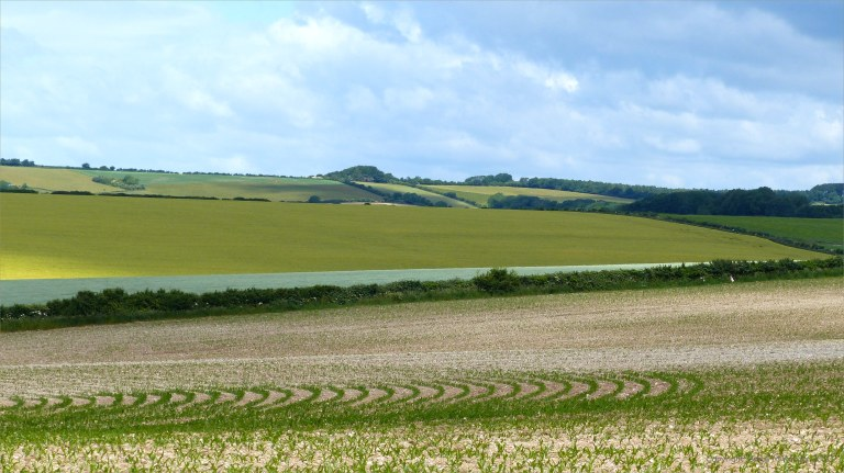 Open countryside around Charlton Down in Dorset