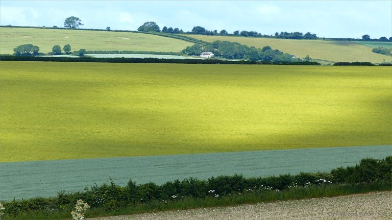 Arable fields at Charlton Down