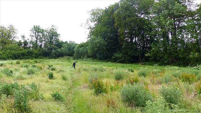 Footpath through a field at Charlton Down