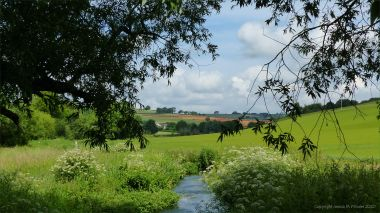 View along the River Cerne near Charlton Down