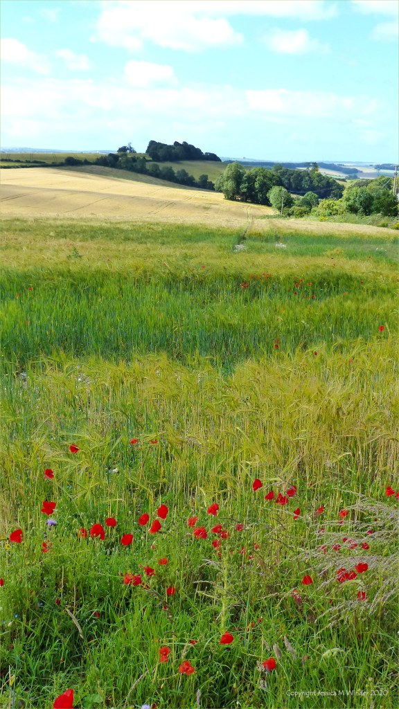 Dorset countryside scenes in summer