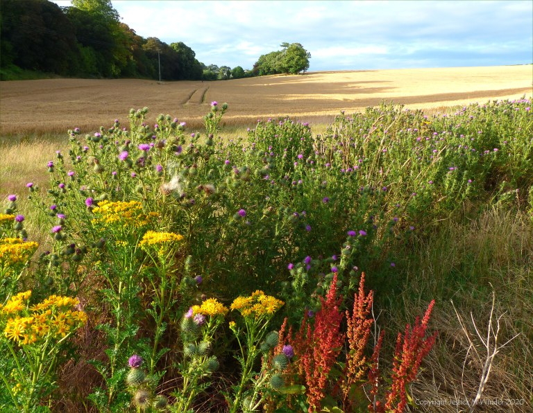 Countryside views near Charlton Down in Dorset