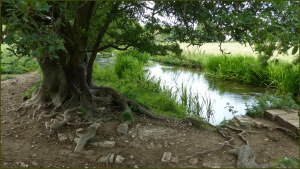 River Cerne between Charlton Down and Charminster in Dorset