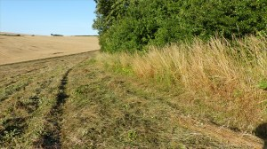 Details of a mown field in July at Charlton Down