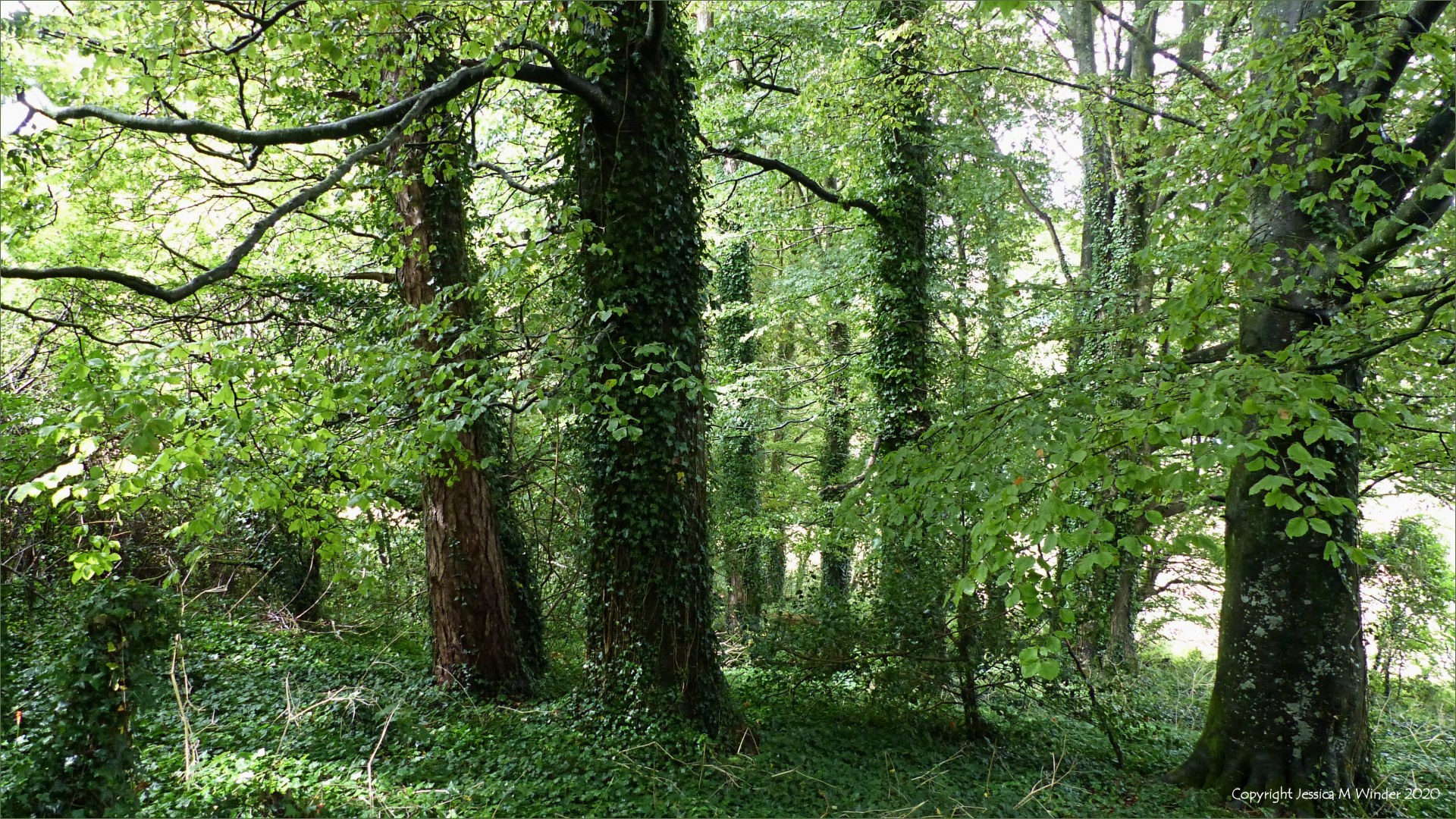 Trees in a narrow woodland belt between fields
