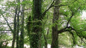 Detail of trees in a woodland belt