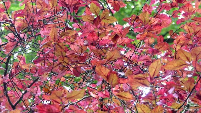 Leaves at Abbotsbury Subtropical Gardens