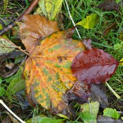 Autumn leaves lying on the ground