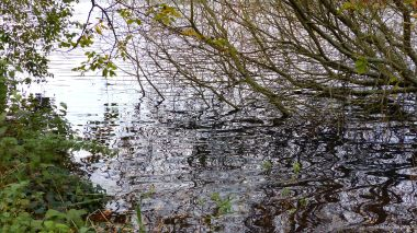 Lakeside reflections of overhanging branches