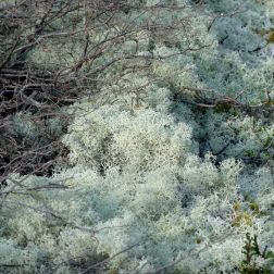 Heathland vegetation