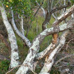 Heathland vegetation