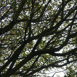 Willow tree in autumn