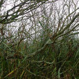 Tangled lakeside vegetation in autumn