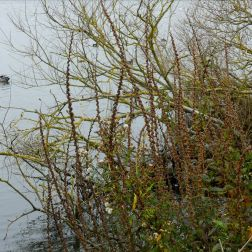 Lakeside vegetation in autumn