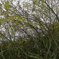 Trees along a lakeside path in autumn
