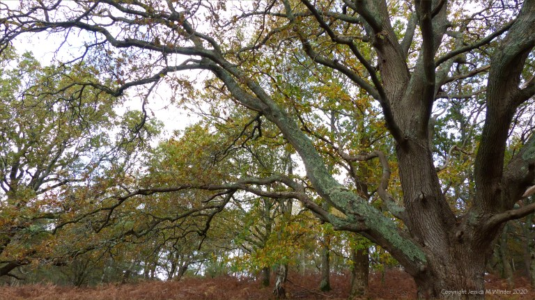 Picture from an autumn walk in Dorset woodland