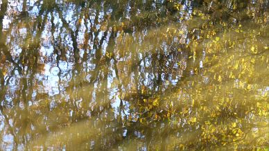 Autumn leaves reflected in water of a woodland pond