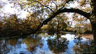 A pond in the woods in autumn