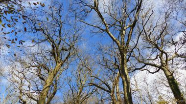 Picture with bare branches from an autumn walk in Dorset woodland