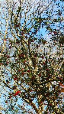 Picture with holly berries from an autumn walk in Dorset woodland