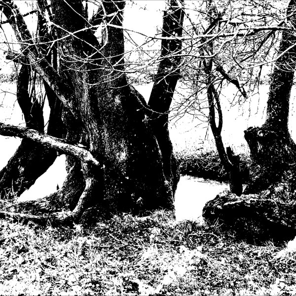 Black and white image of trees on a riverbank