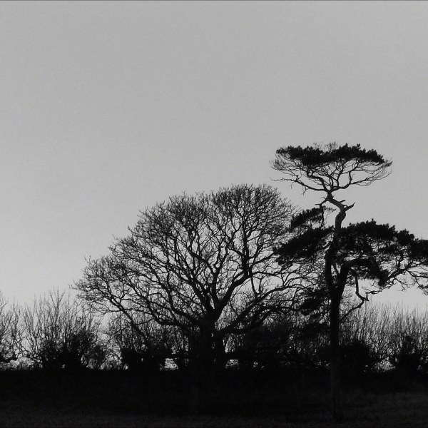 Trees silhouetted against the skyline in winter