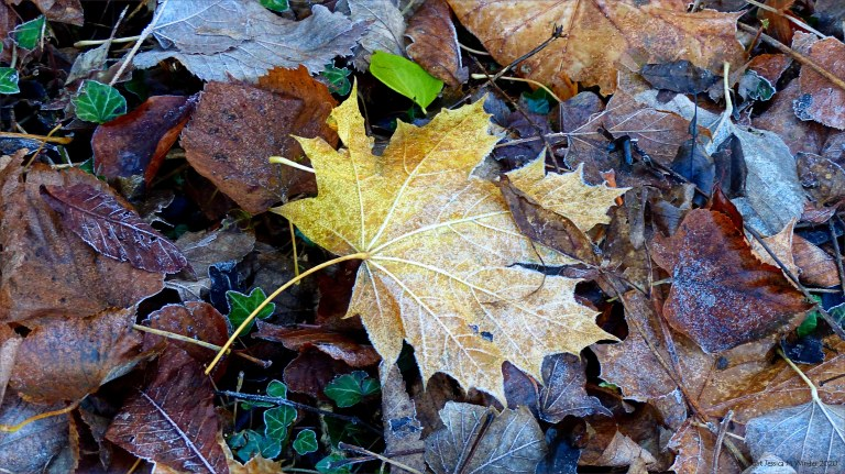 Fallen leaves on the ground in December