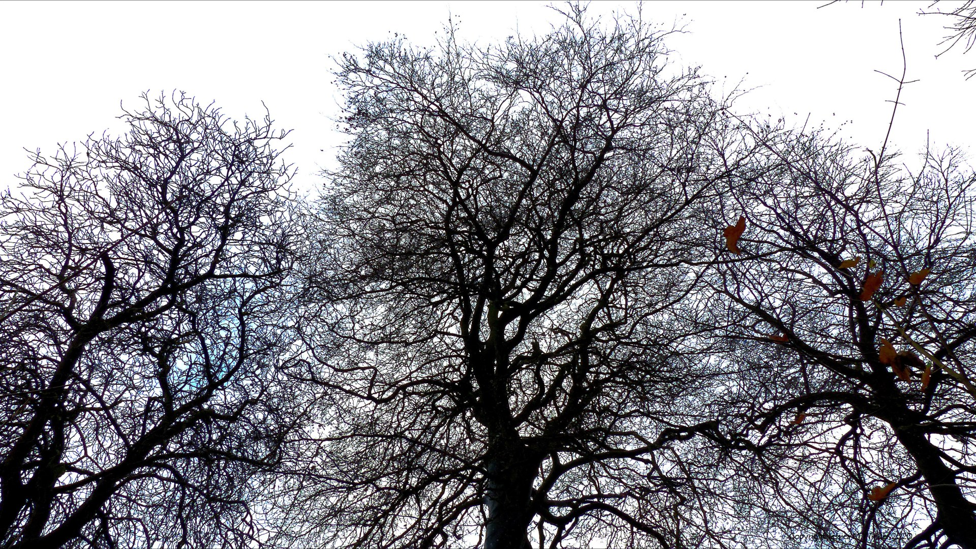 Natural patterns of branches in winter trees