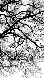 Natural patterns of winter branches