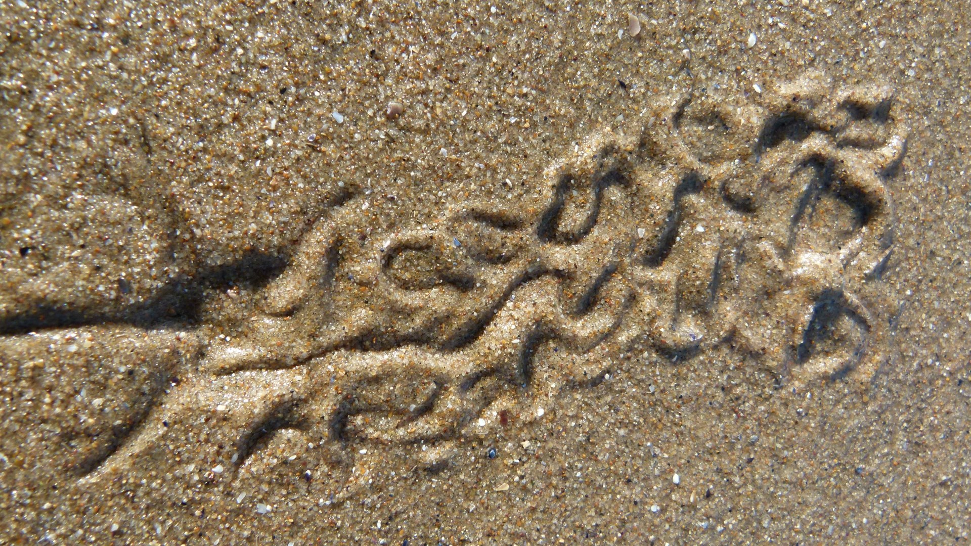 Tracks and traces on seashore sand