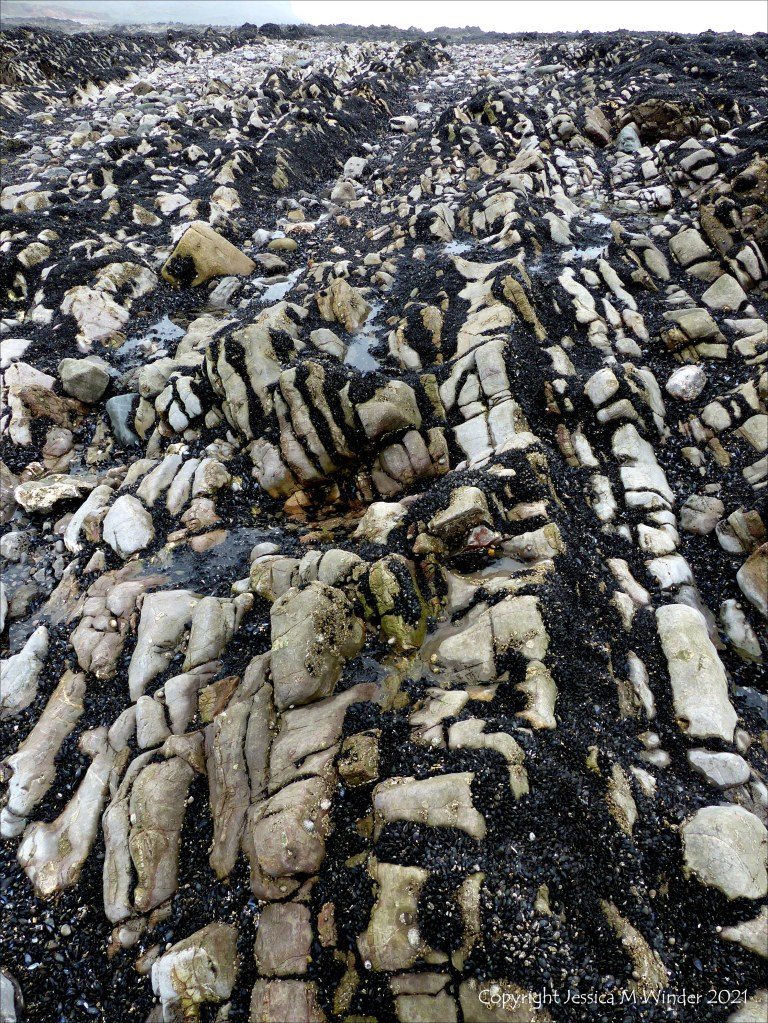 Patterns of mussels growing on rocks